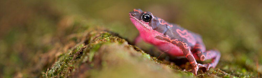 Bert Willaert Nature Photography